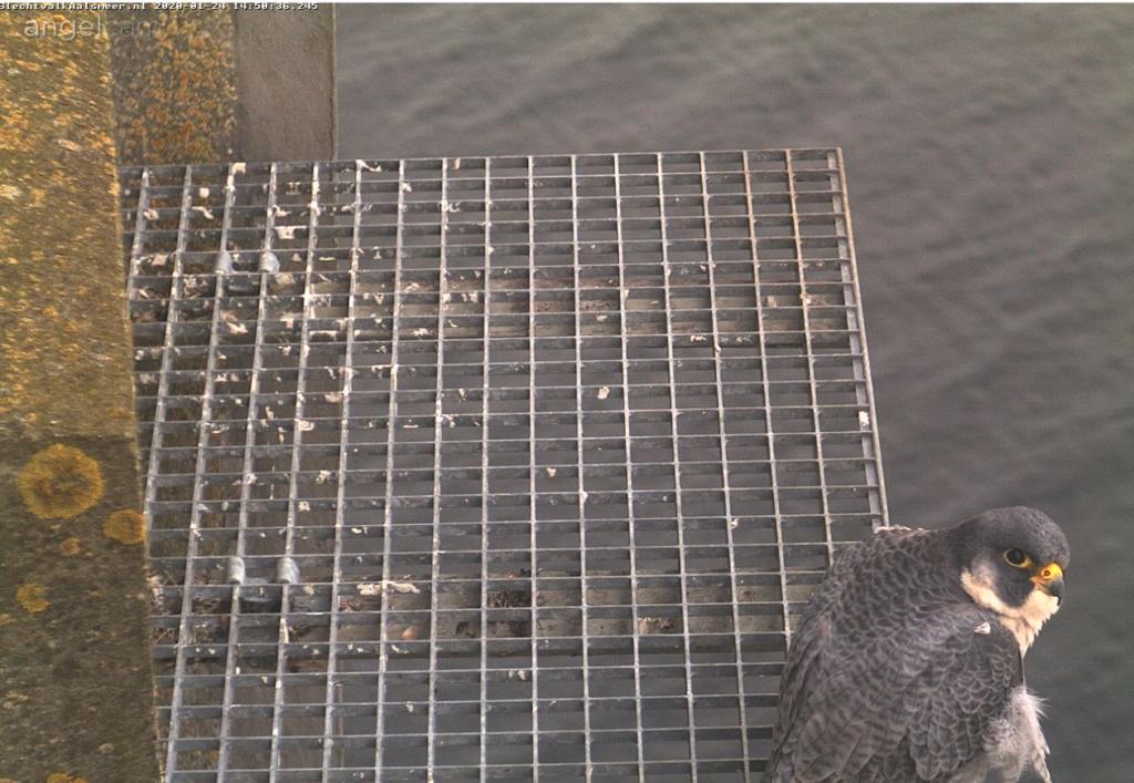 Aalsmeer/Watertoren. Youngster en Sidonia - Pagina 6 241aa110