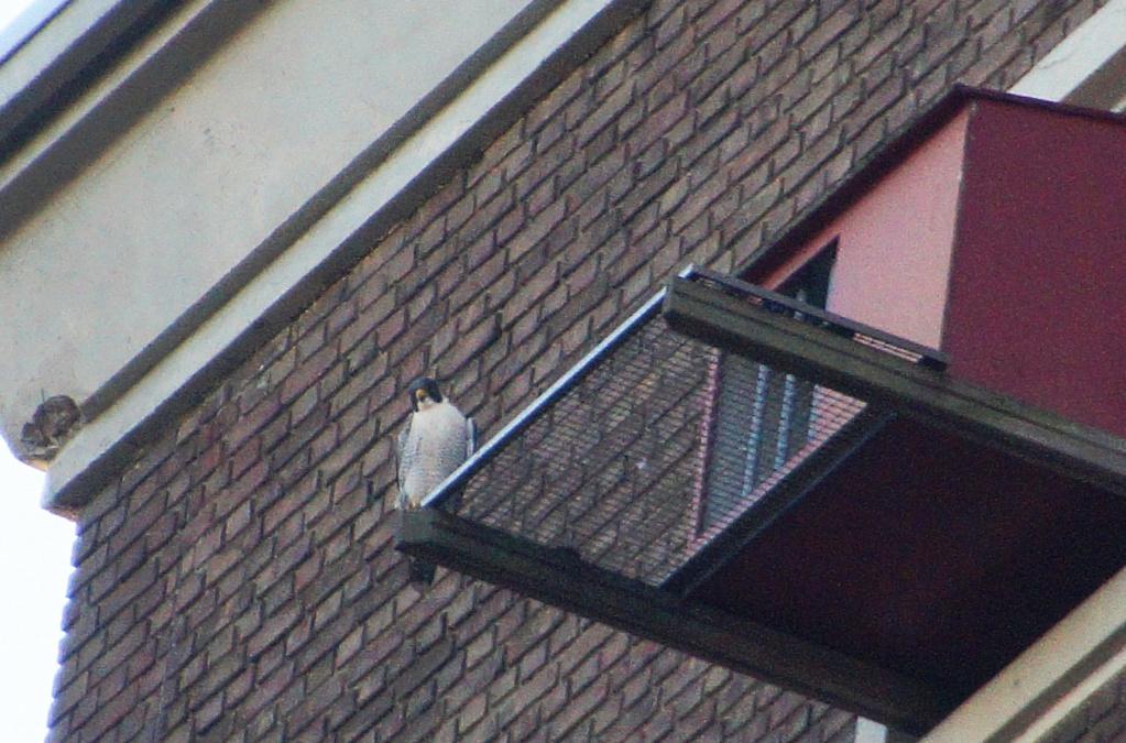 Leiden / Uniper Benelux N.V. - Pagina 4 242lei10