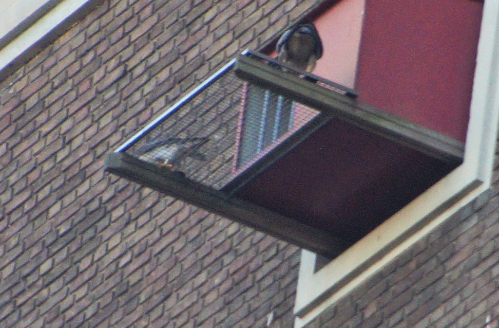 Leiden / Uniper Benelux N.V. - Pagina 4 242lei12
