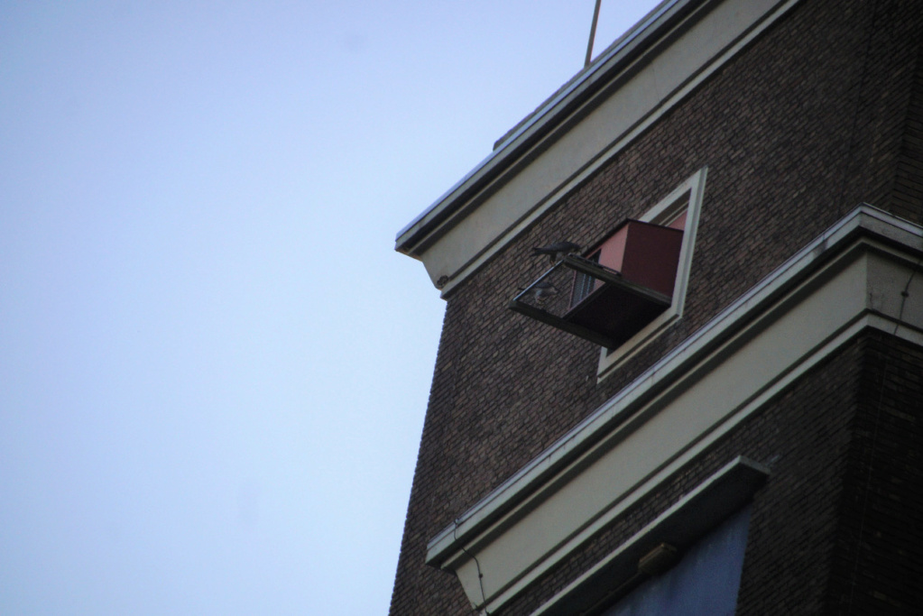 Leiden / Uniper Benelux N.V. - Pagina 4 242sam10