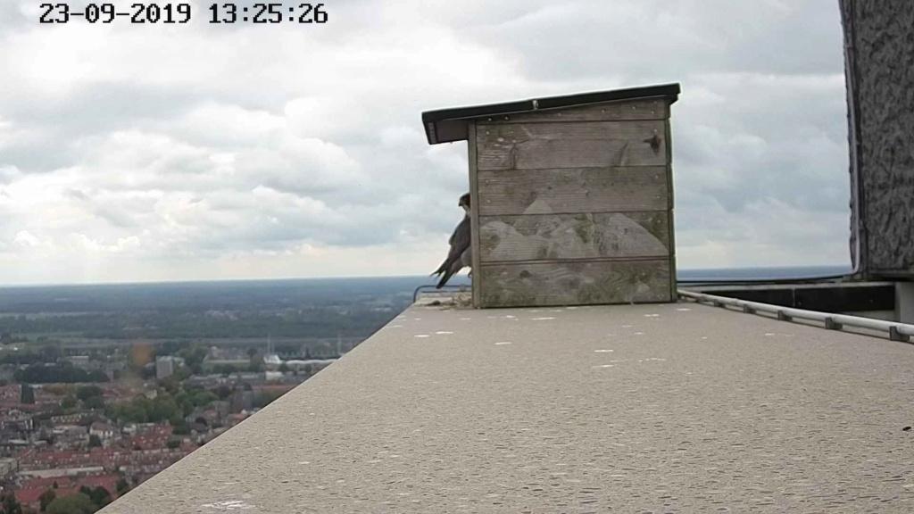Tilburg Til ~ Borg. - Pagina 22 249t11