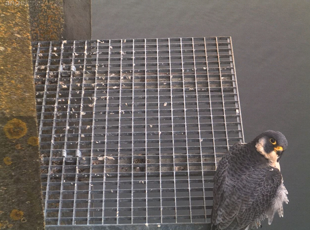 Aalsmeer/Watertoren. Youngster en Sidonia - Pagina 3 2612aa10