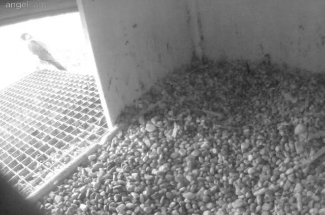 Aalsmeer/Watertoren. Youngster en Sidonia - Pagina 4 261d210