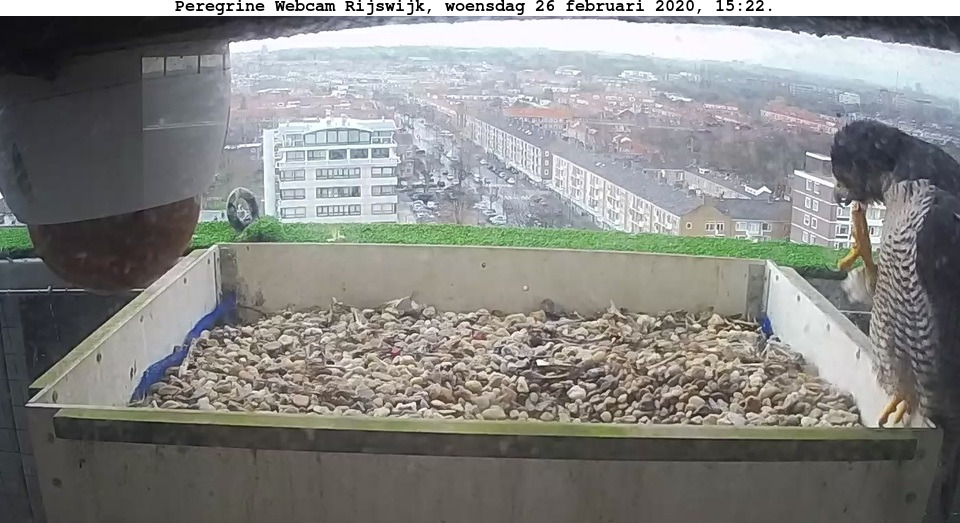 Rijswijk/Klokkentoren - Pagina 3 262r110