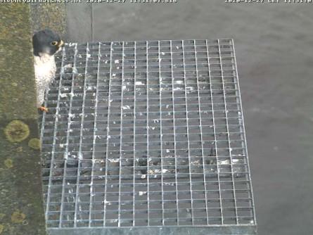 Aalsmeer/Watertoren. Youngster en Sidonia 2712aa11