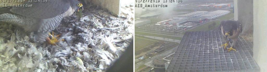 Amsterdam AEB. V. 2FC (Bochum-Wiemelhausen 2014) ~ M. LL (A'dam Hemweg 2014) - Pagina 7 271aeb13