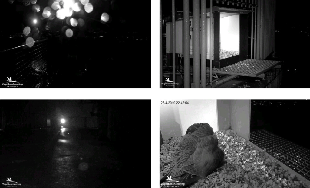Campics/ afbeeldingen De Mortel 2019 deel 3 vanaf 22 april - Pagina 5 27422310