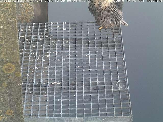 Aalsmeer/Watertoren. Youngster en Sidonia - Pagina 3 2812aa10