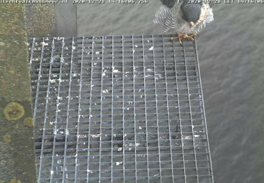 Aalsmeer/Watertoren. Youngster en Sidonia - Pagina 2 2812aa13