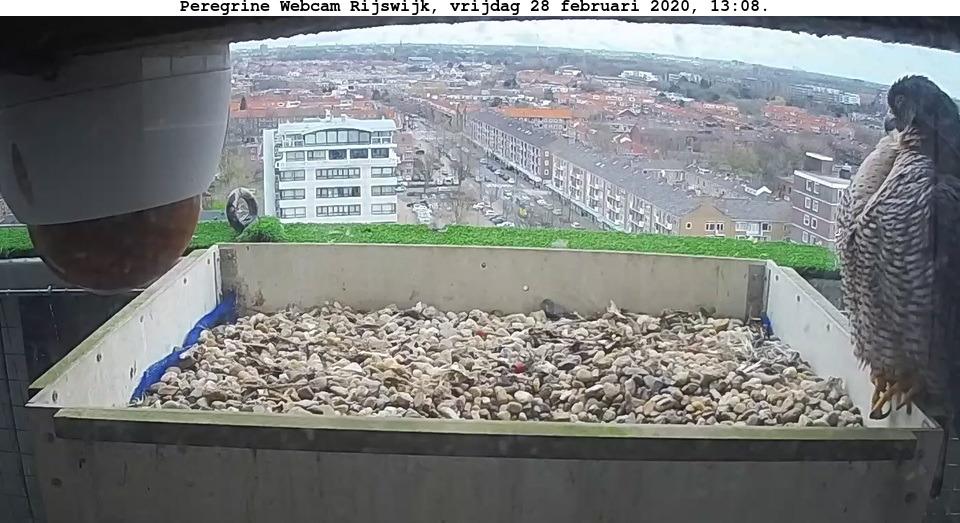 Rijswijk/Klokkentoren - Pagina 4 282r10