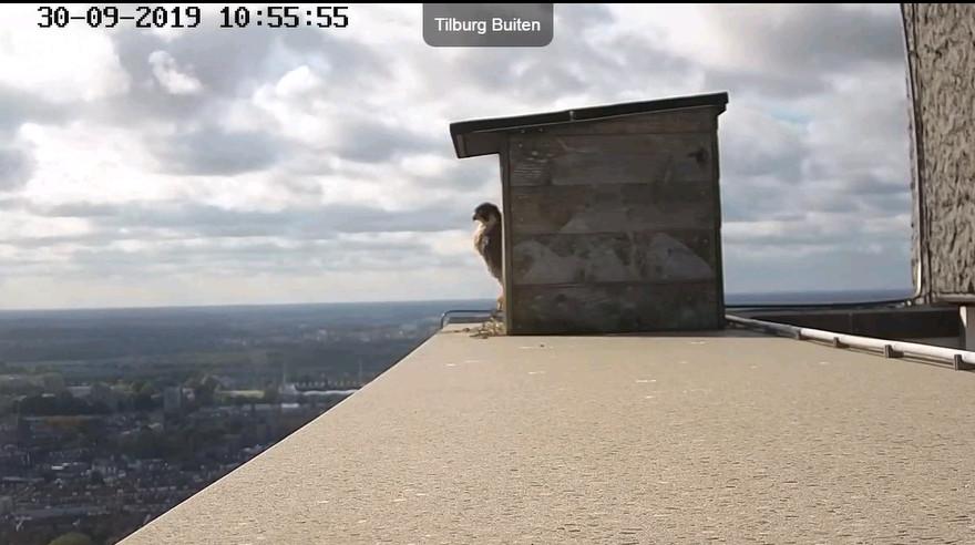 Tilburg Til ~ Borg. - Pagina 23 309t10
