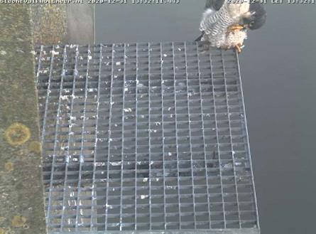 Aalsmeer/Watertoren. Youngster en Sidonia - Pagina 2 3112aa10