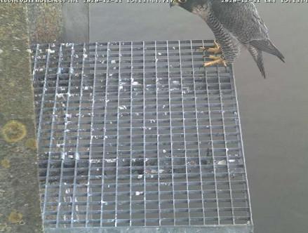 Aalsmeer/Watertoren. Youngster en Sidonia - Pagina 2 3112aa11