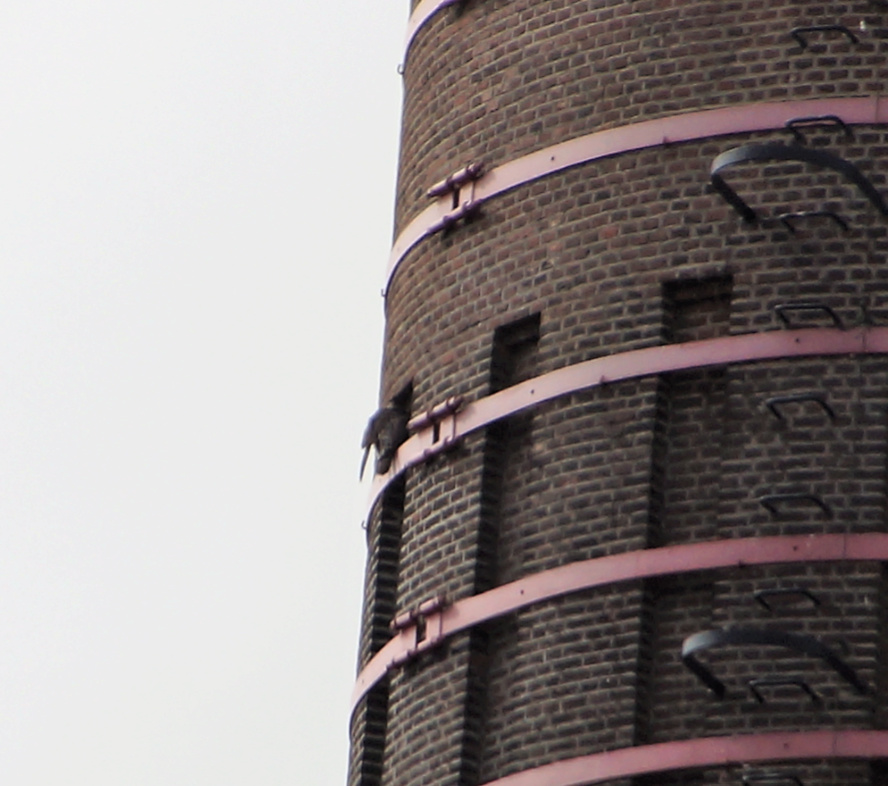 Leiden / Uniper Benelux N.V.   - Pagina 7 34lei110