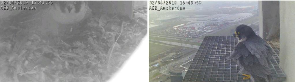 Amsterdam AEB. V. 2FC (Bochum-Wiemelhausen 2014) ~ M. LL (A'dam Hemweg 2014) - Pagina 8 42aebm12