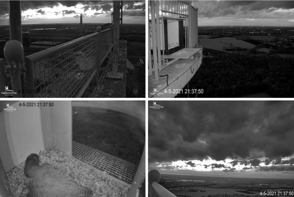 campics vanaf pip/ hatch 1e kuiken © VWGGemert/VBN - Pagina 20 45213710