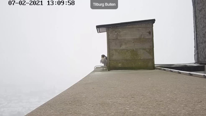 Tilburg/Westpointtoren - Pagina 3 72t11