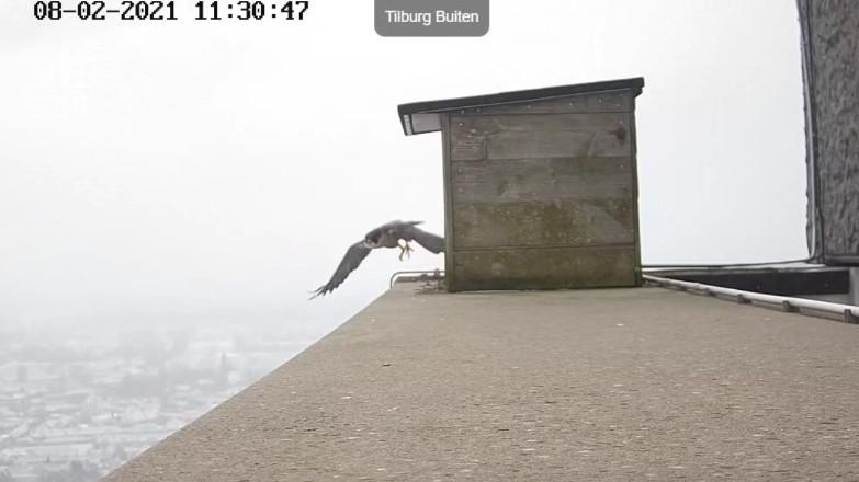 Tilburg/Westpointtoren - Pagina 3 82t10