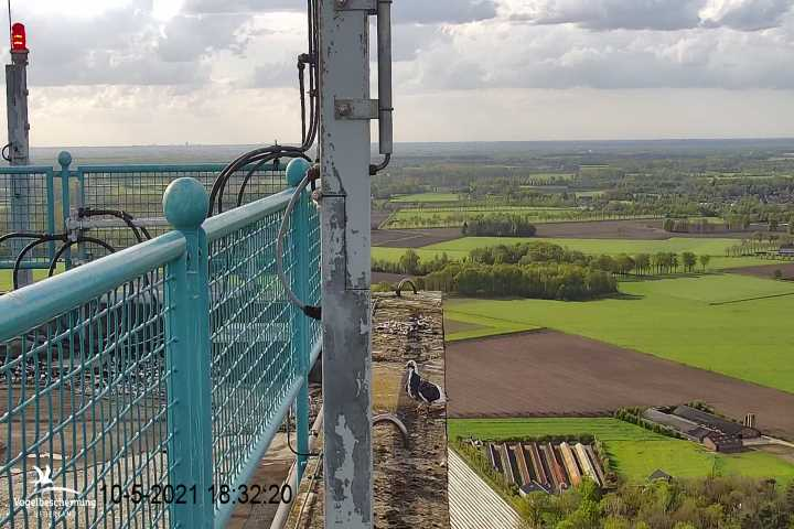 campics vanaf pip/ hatch 1e kuiken © VWGGemert/VBN - Pagina 31 Cam_1266