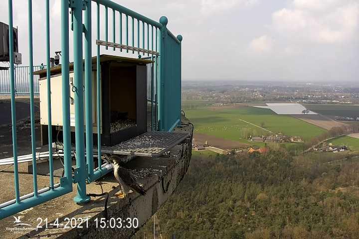 campics vanaf pip/ hatch 1e kuiken © VWGGemert/VBN Cam_2135