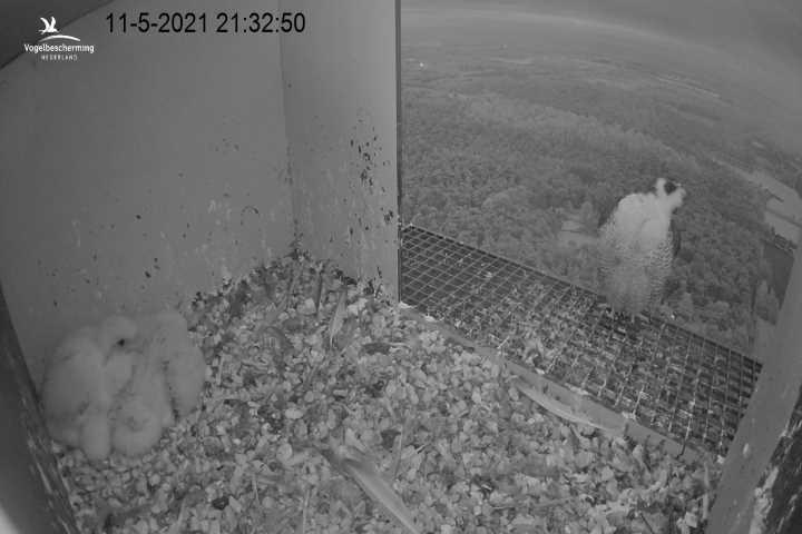 campics vanaf pip/ hatch 1e kuiken © VWGGemert/VBN - Pagina 33 Cam_3455