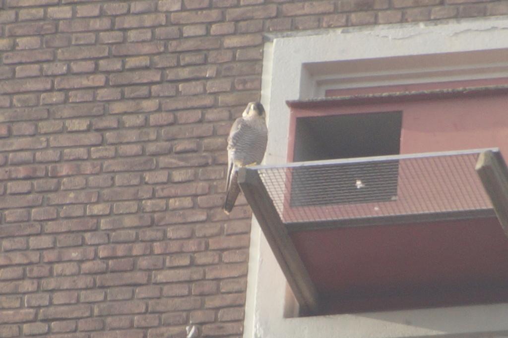 Leiden / Uniper Benelux N.V. Dsc05211