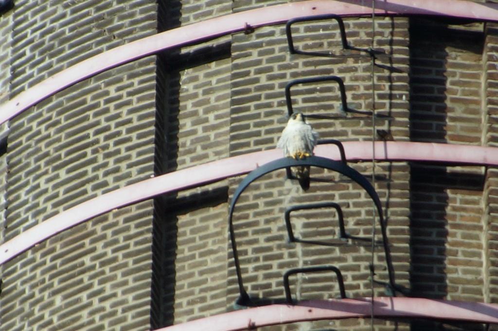 Leiden / Uniper Benelux N.V. - Pagina 3 Dsc05413