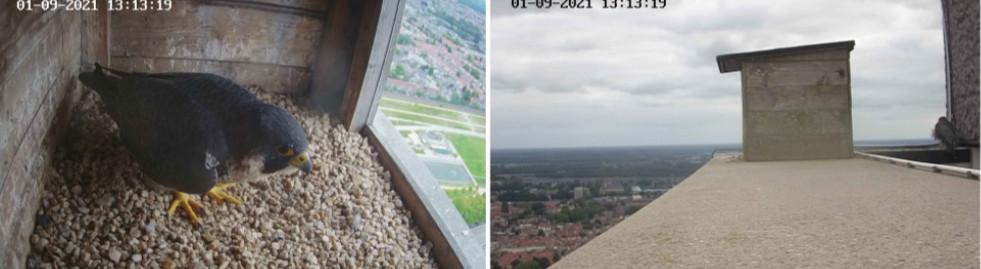 Tilburg/Westpointtoren - Pagina 13 T1910