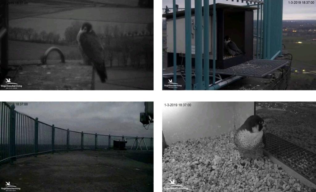 Campics/afbeeldingen De Mortel 2019  deel 1 vanaf 25 Feb. - Pagina 4 V183710
