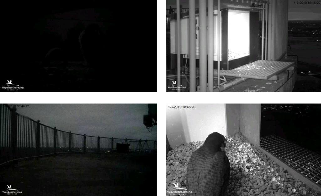 Campics/afbeeldingen De Mortel 2019  deel 1 vanaf 25 Feb. - Pagina 4 V184611