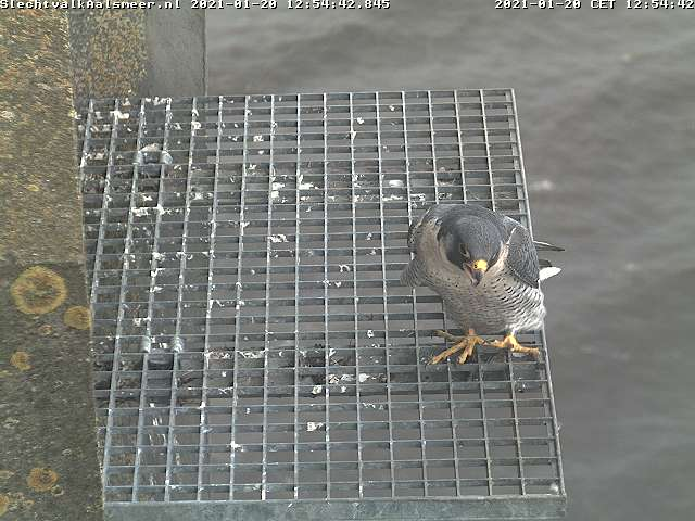 Aalsmeer/Watertoren. Youngster en Sidonia - Pagina 3 Watert15
