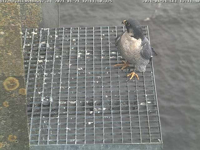 Aalsmeer/Watertoren. Youngster en Sidonia - Pagina 3 Watert17