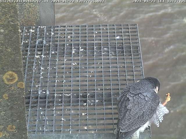 Aalsmeer/Watertoren. Youngster en Sidonia - Pagina 3 Watert18