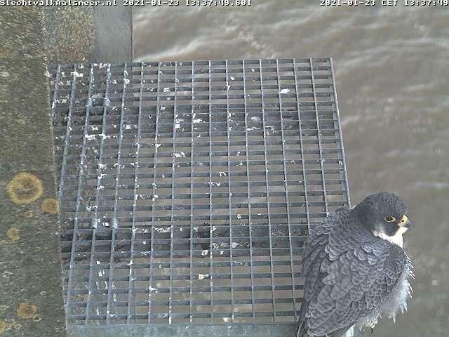 Aalsmeer/Watertoren. Youngster en Sidonia - Pagina 3 Watert19