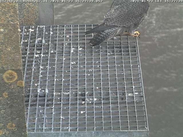 Aalsmeer/Watertoren. Youngster en Sidonia - Pagina 3 Watert22