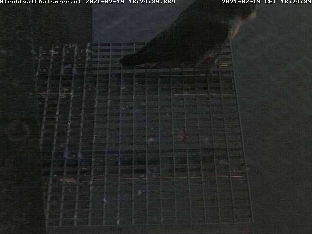 Aalsmeer/Watertoren. Youngster en Sidonia - Pagina 6 Watert35