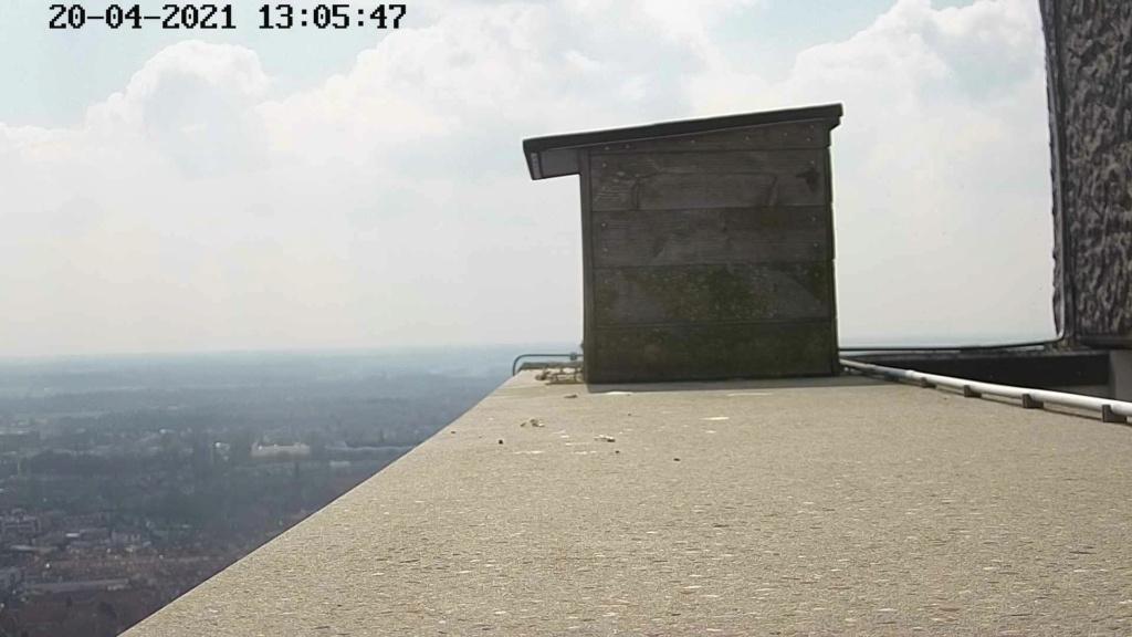 Tilburg/Westpointtoren - Pagina 7 Westpo41