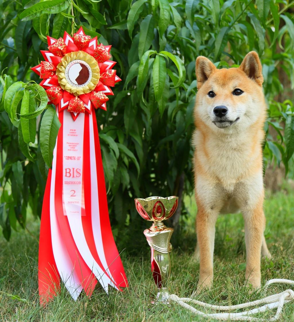 Как найти очень хорошего щенка? 858a0110