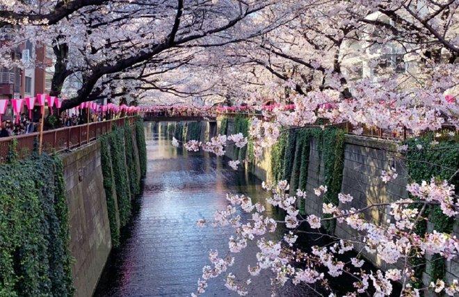 Recomendaciones TOKYO, JAPÓN - Página 15 13534310