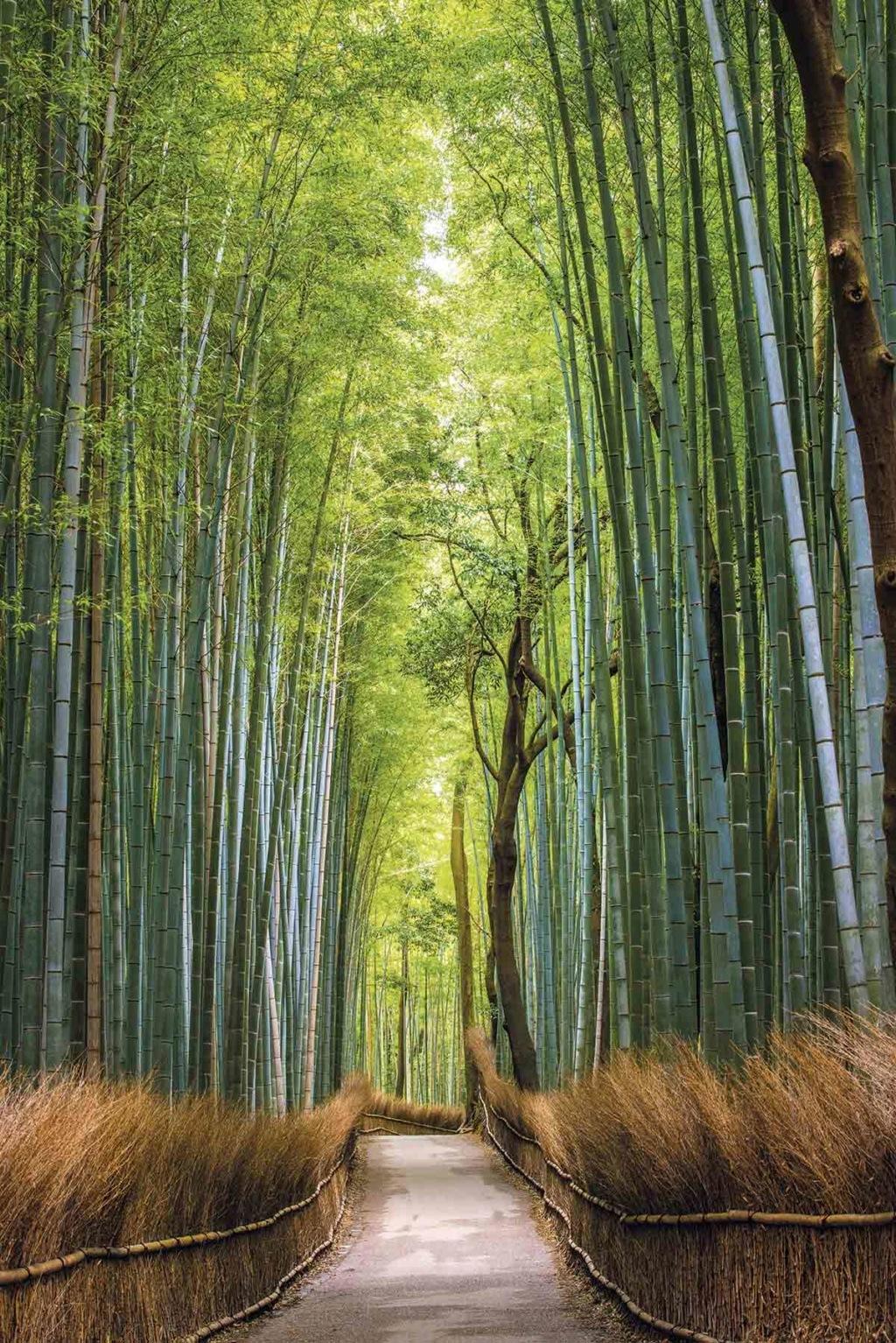 Recomendaciones TOKYO, JAPÓN - Página 15 Bambu10
