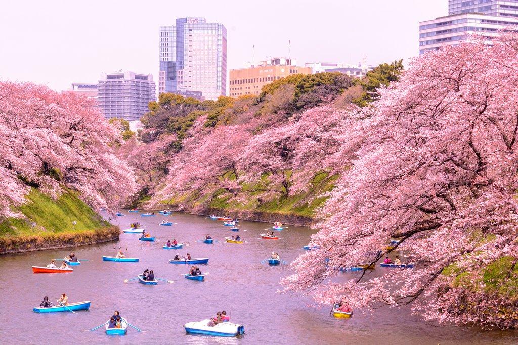 Recomendaciones TOKYO, JAPÓN - Página 15 Princi10
