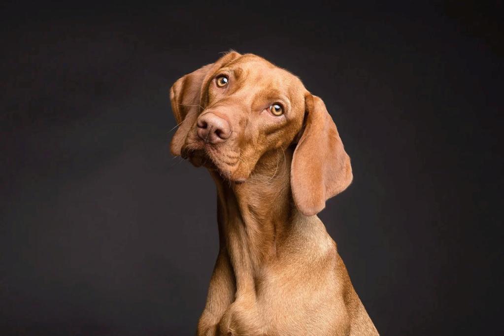 Rubys neues Ava Shöppchen (Bildbearbeitung) Dog-3210