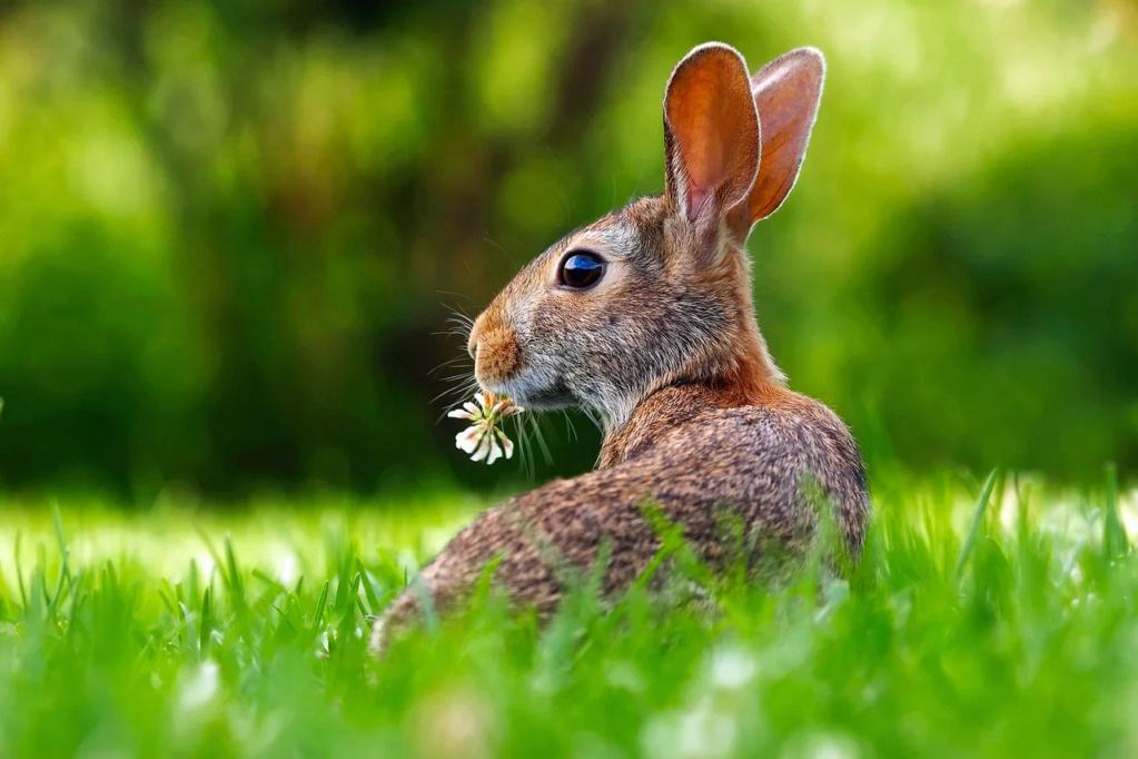 Rubys neues Ava Shöppchen (Bildbearbeitung) Rabbit10