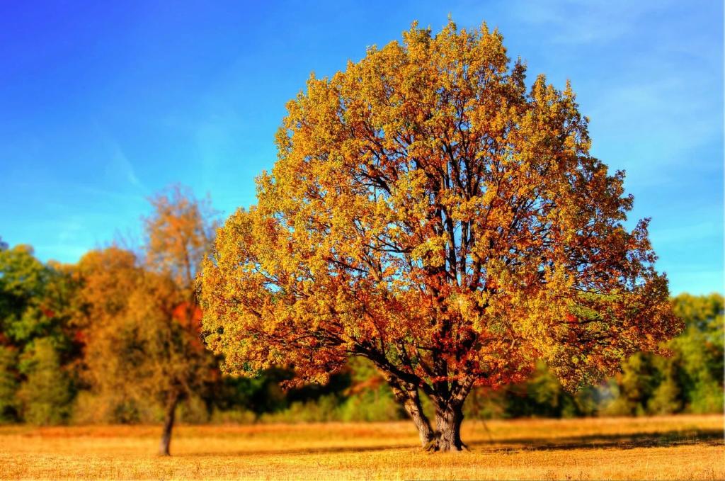 Rubys neues Ava Shöppchen (Bildbearbeitung) Tree-910