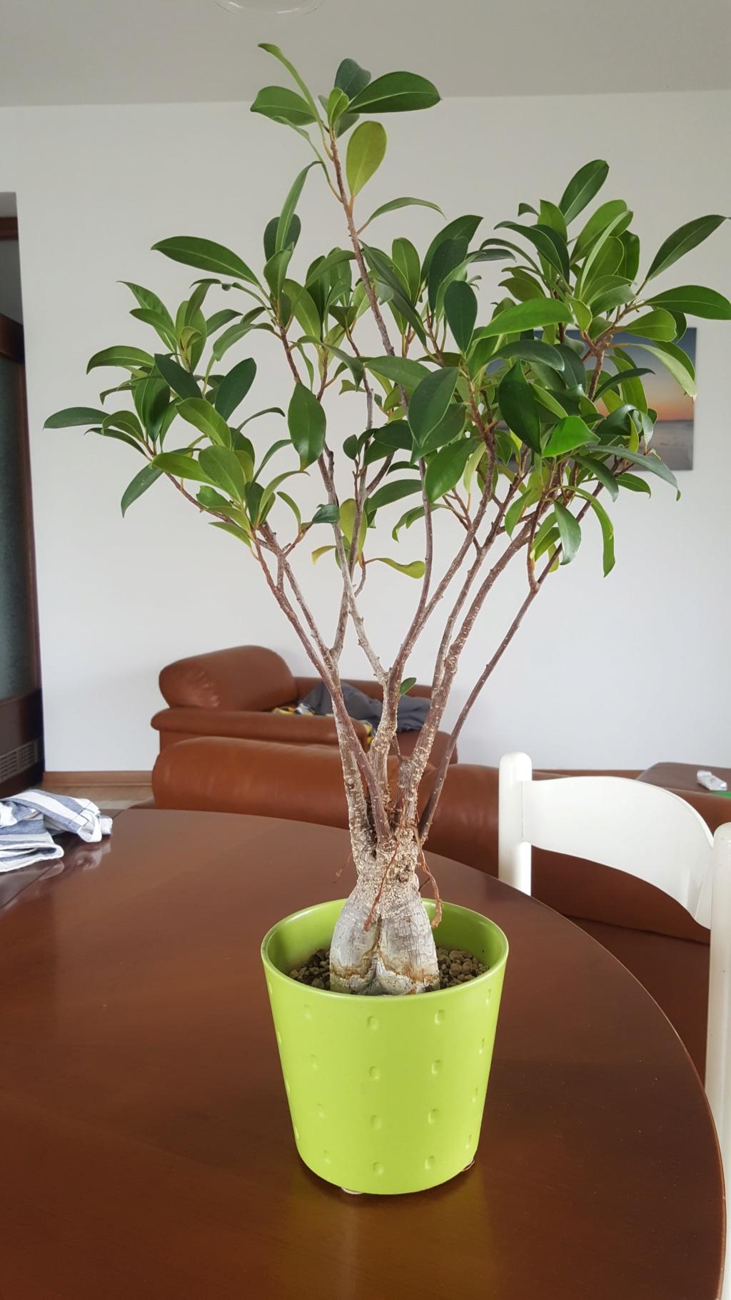 Ritorno a prendermi cura delle piante e riapre la stagione 20200410