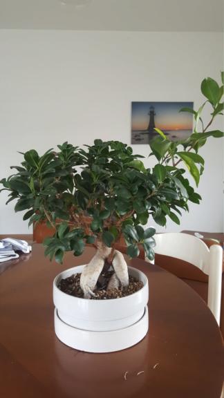 Ritorno a prendermi cura delle piante e riapre la stagione 20200420