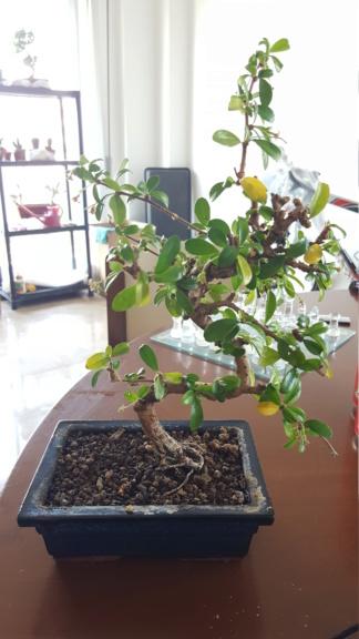 Ritorno a prendermi cura delle piante e riapre la stagione 20200429