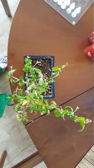 Ritorno a prendermi cura delle piante e riapre la stagione 20200432