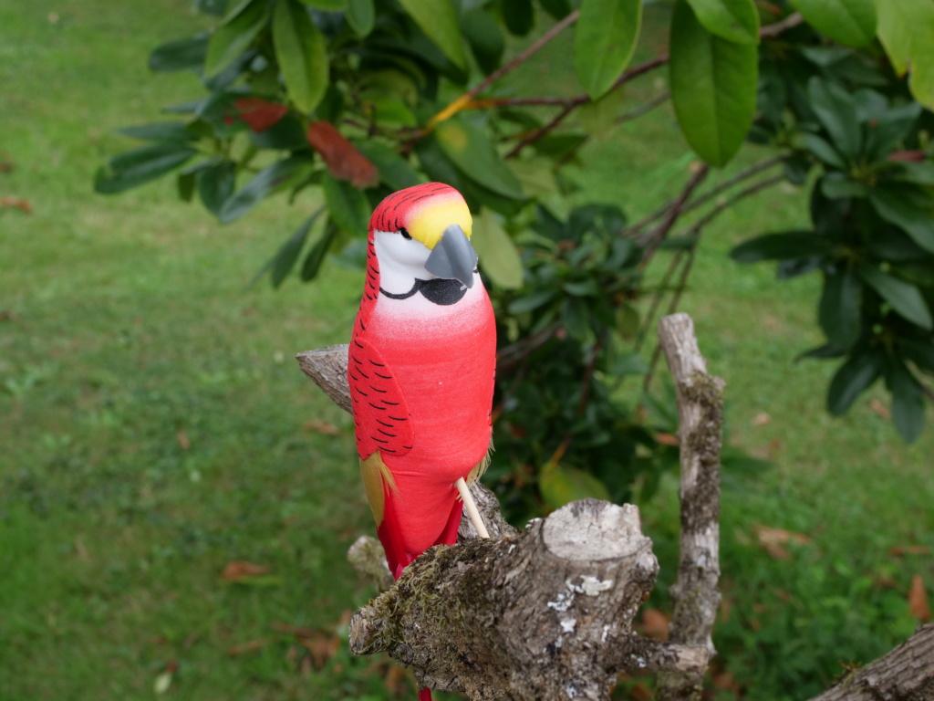 perroquet.... Pana0827