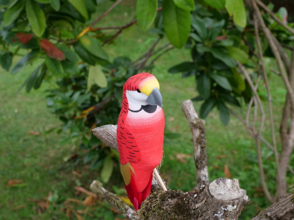 perroquet.... Pana0828